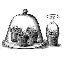 From an 1870 garden book