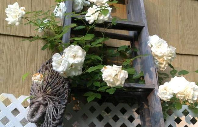 Garden ladder projects