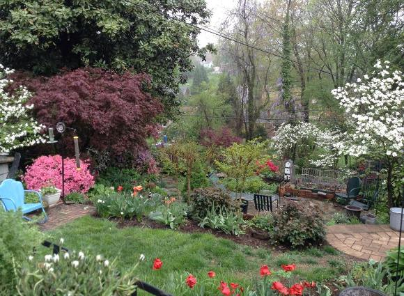 Mary Dunleavy shows, 'Spring in my garden'