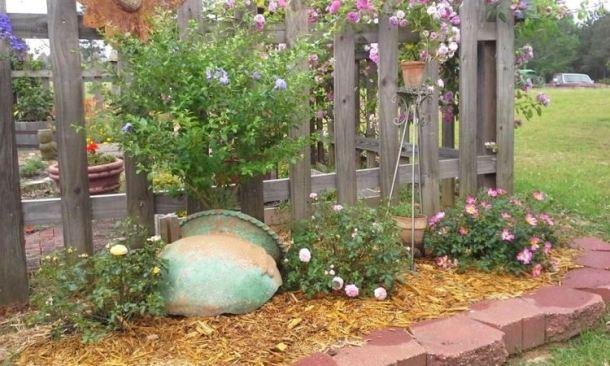 Billie Hayman's broken pot shades the roots of her tree