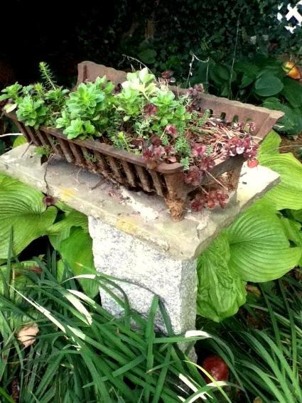 Cherrie Carine grows Sedum in her old log grate...