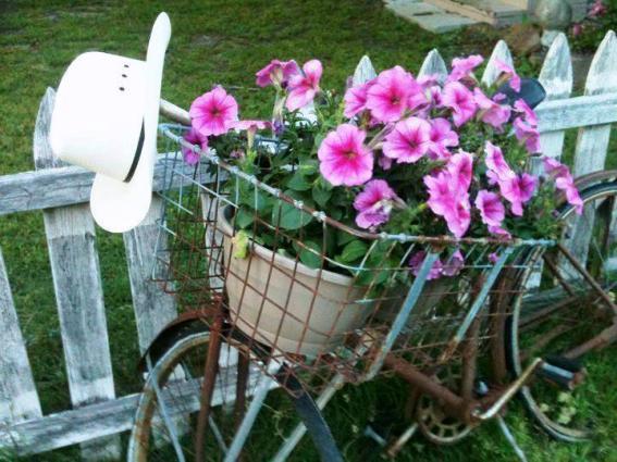 Deborah Smith's petunias in her bike baket
