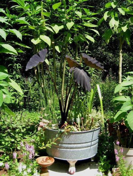 Barbara Stanley's elegant wash tub