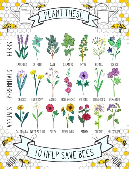 Grow these, save bees