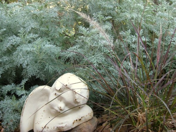 Artemisia is easy to propagate if there's a low hanging branch
