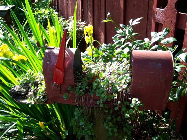 Myra Glandon's mailbox, last year