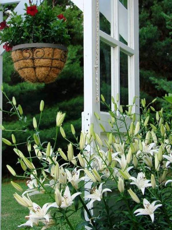 Jeanne Sammons's Asiatic lilies