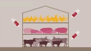 impact viande