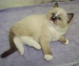 Floppycats.com Charlie