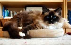 Jaska on his 9th Birthday - Dec. 30, 2009