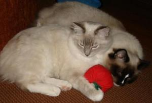 Trigg and Charlie and Yeowww! Catnip Apple