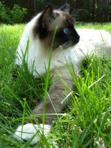 Charlie in grass
