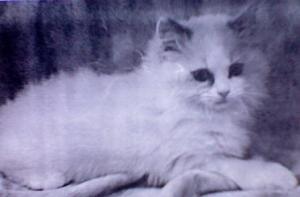 Sunny as A Kitten