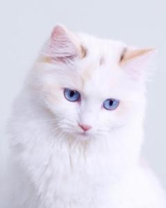 Mushu as a kitten