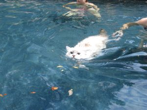 Trigg Swimming