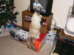 Diamond Watching TV