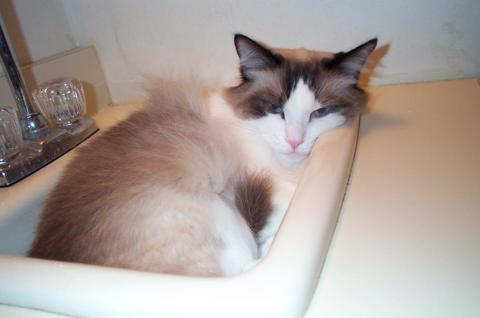 Dinky in a sink owned by Lynn
