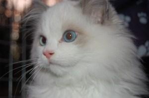 Humphrey's Face as a Kitten