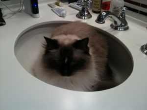 Maddie in a sink