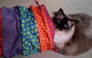 Caymus, a 6-year old Seal Mitted Ragdoll, and Petstages Cuddle Coil