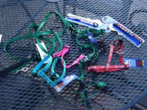 Lupine Collars, Harnesses and Leads