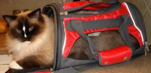 Charlie in Carrier 10-15-10