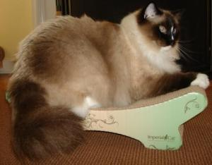 Charlie on The Imperial Cat Zen Lounger