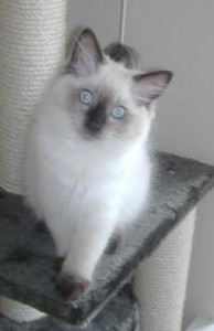 Ted as a kitten