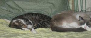Louie sleeping with Scooter, our Tabby