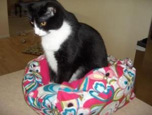 Black Kitty on a Jo-Lin Designs cat bed