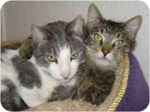 adoptapet.com cats
