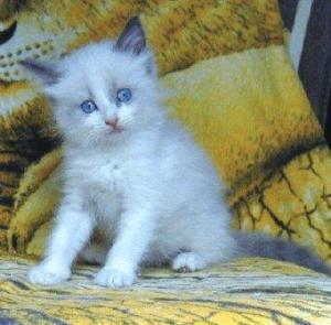 Louie at 5 weeks old