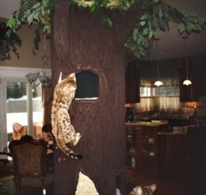 Cat Scratching Tree