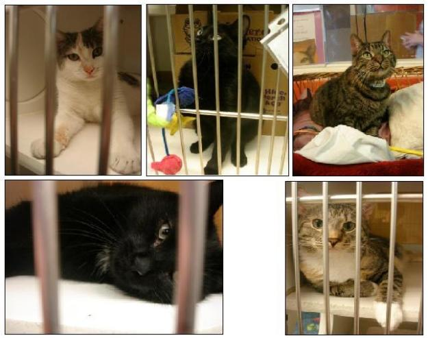 Animal Haven Cats