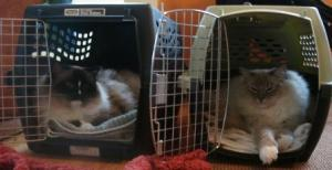 Charlie in the Double Door Deluxe® Pet Carrier and Trigg in the Kennel Cab® Fashion Pet Carrier by Petmate