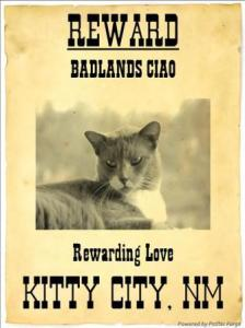 Kitty City NM Wanted Poster