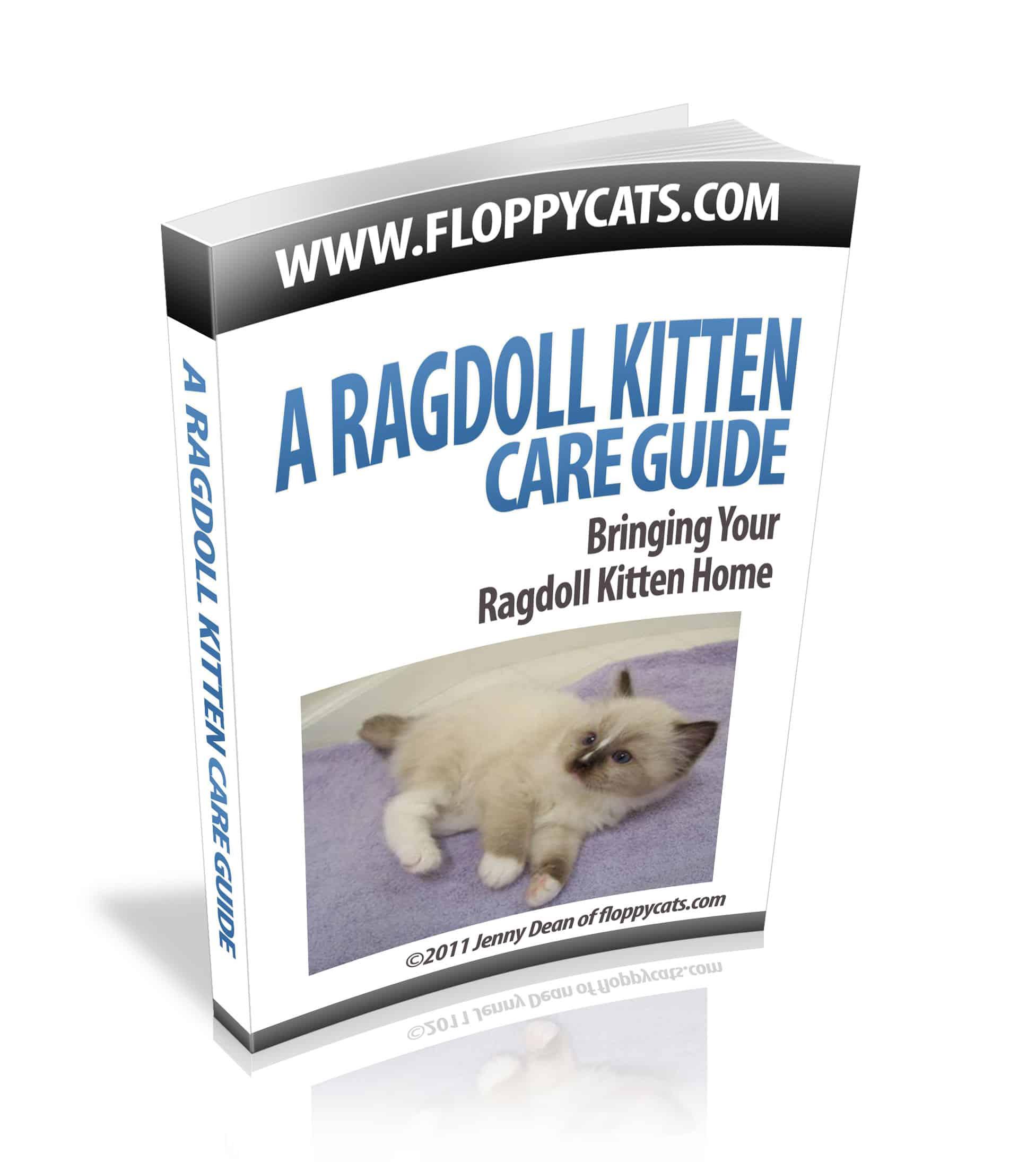 ragdoll-cat-prev2