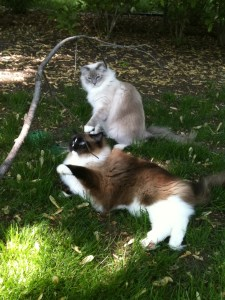 Charlie and Trigg playing with a stick