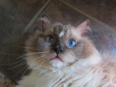Tyco's Eye Color Up Close!
