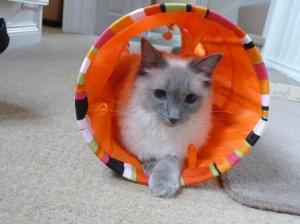 Sookie in the Cat Tunnel