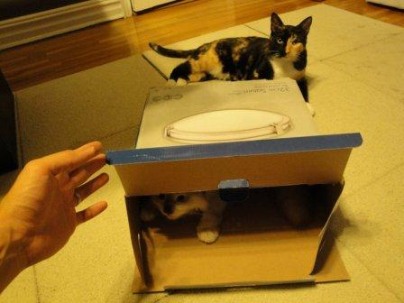 Taro in a box