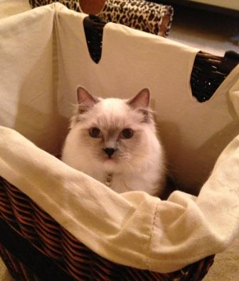 Eli in the laundry basket, loved by Maureen in the UK