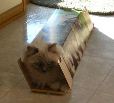 Mulsanne in tiny box loved by Karen
