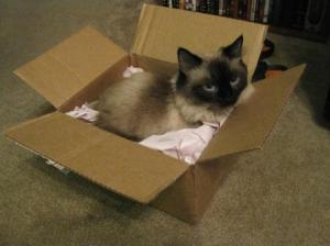 Zoey, owned by Kristen Collins, claims a new box