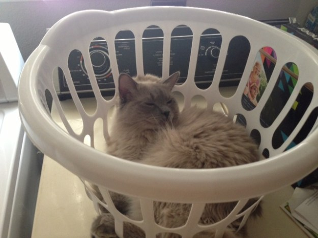 Shadow in a Laundry Baskets loved by Liz Broussard