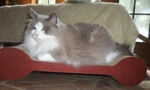 Sam on the Brawny Cat Scratch'n Slumber Comfort Padlets