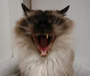 Rags Yawning when he was 18 years old