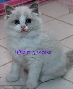 Violet at 5 weeks