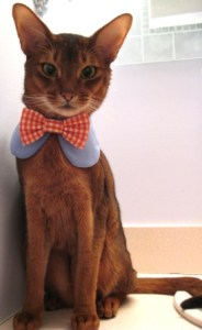 Sweet Round Collar in choice of color or print & interchangeable bow tie $19