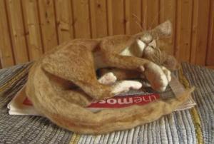 sleeping cat Max